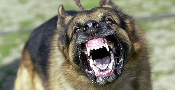 Training Methods For Aggressive Dogs